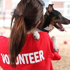 Looking for a Christmas volunteering opportunity?